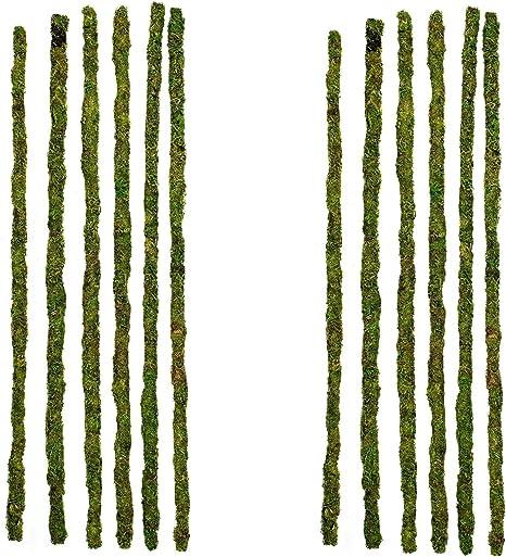 24-Inch 6-Pack Galapagos Mossy Terrarium Sticks