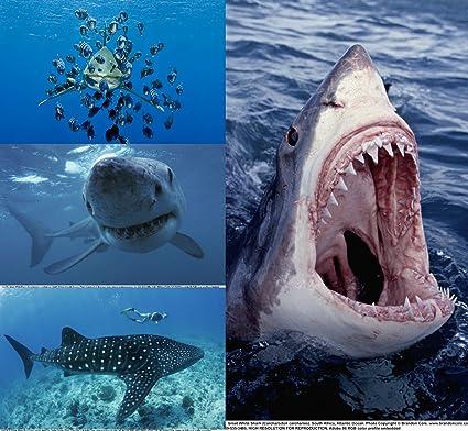 Set de tarjetas postales 3d:Tiburones (4 unidades de 3 d de ...