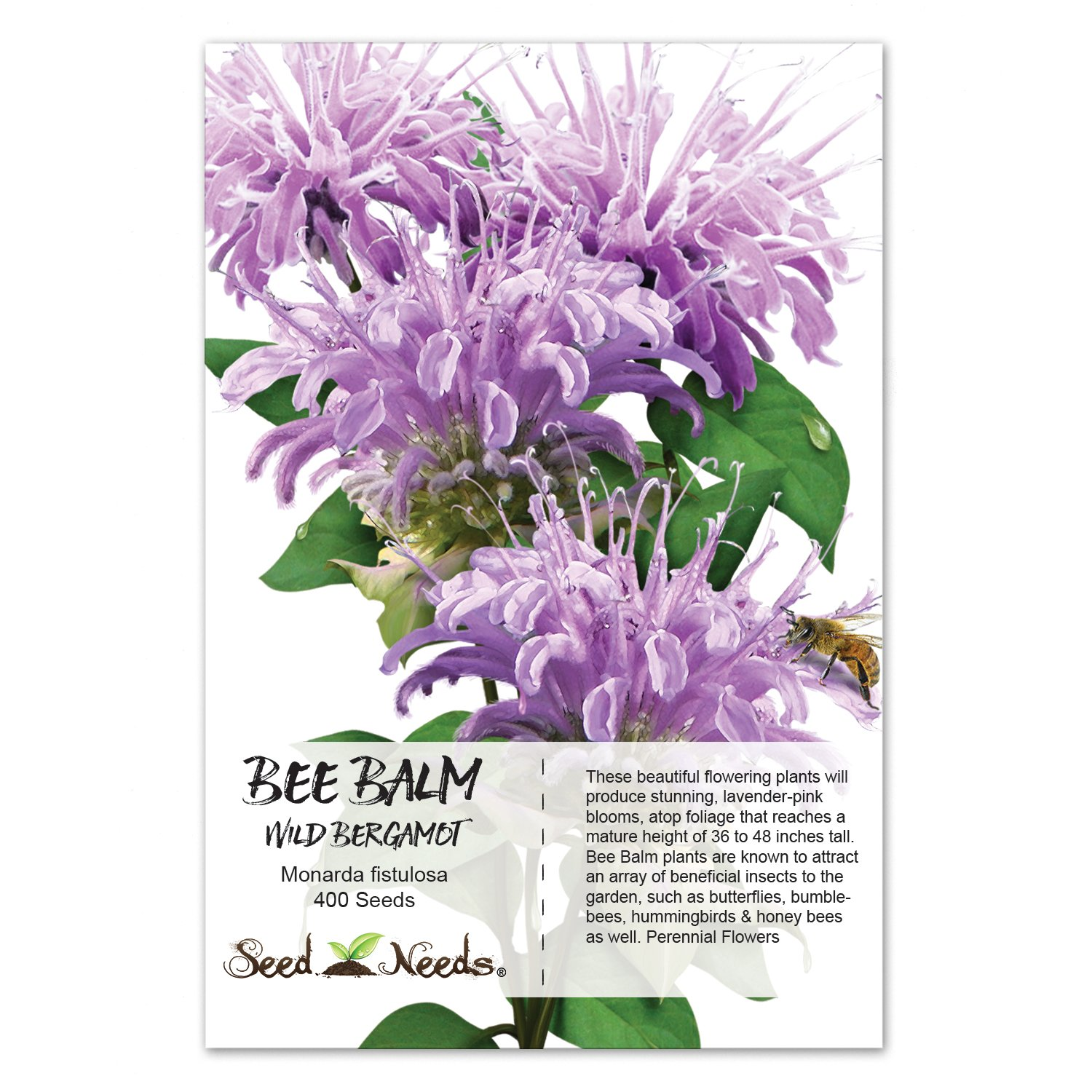 Amazoncom Package Of 400 Seeds, Wild Bergamot Bee Balm (Monarda