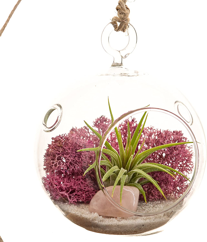 Mini Air Plant Terrarium with Dusty Rose Moss, Natural White Sand Rose Quartz 3 Round