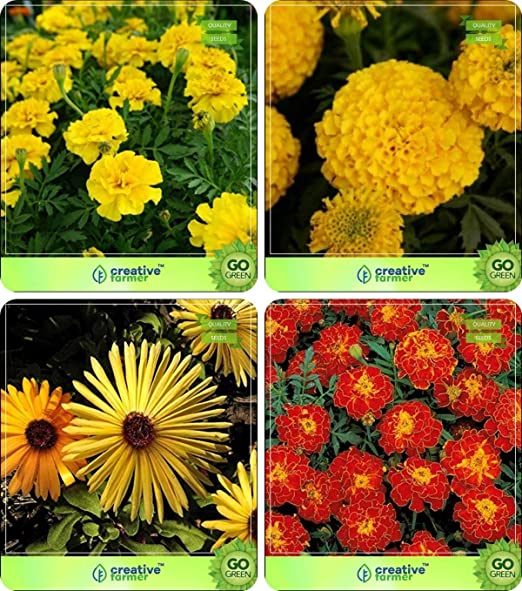 Semillas de flores Pinkdose®: Plantas con macetas Purificador de ...