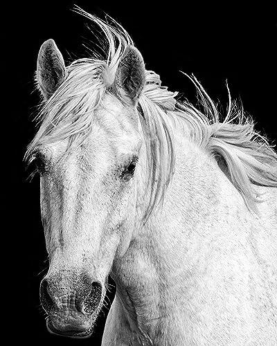 Horse Wall Art Decor Wild Print Black And White Living Room