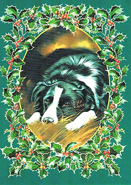 Amazon Com Border Collie Classic Boxed Christmas Cards Box Of 10