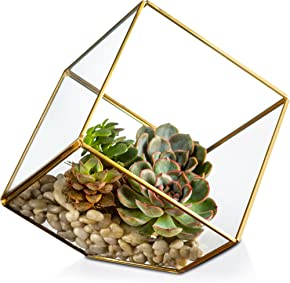 KooK Gold Geometric Terrarium Plant Holder
