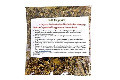 Bsdorganics Acalypha Indicaindian Nettleindian Mercuryindian