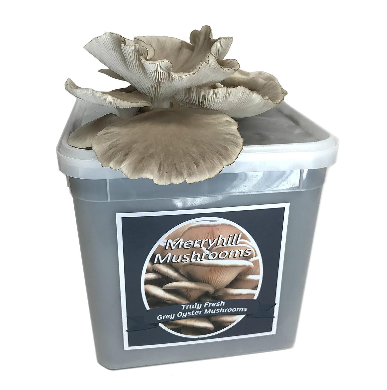Merryhill Mushrooms - Grey Oyster Mushroom Growing Kit
