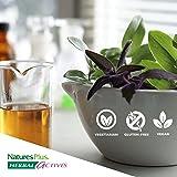 NaturesPlus Herbal Actives Licorice
