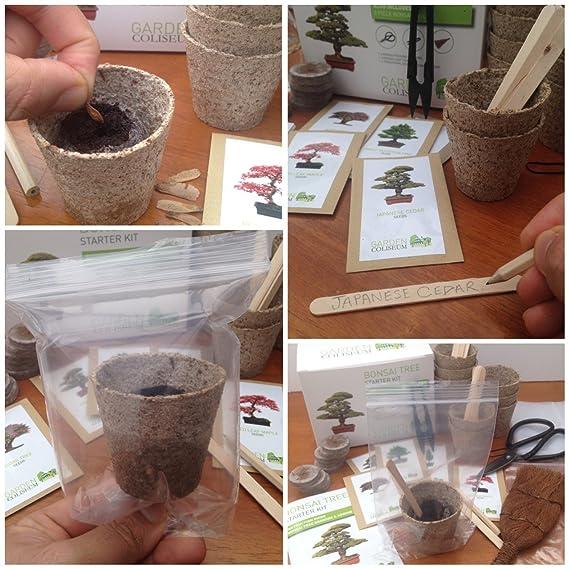 KIT BONSAI ¡CULTIVA TUS PROPIOS ÁRBOLES Kit de germinación bonsais SET REGALO DE JARDINERÍA Con 3 Herramientas superiores, set de regalo de primera ...