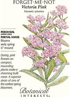 Amazon 100 victoria pink forget me not myosotis sylvatica victoria pink forget me not seeds 25 grams mightylinksfo