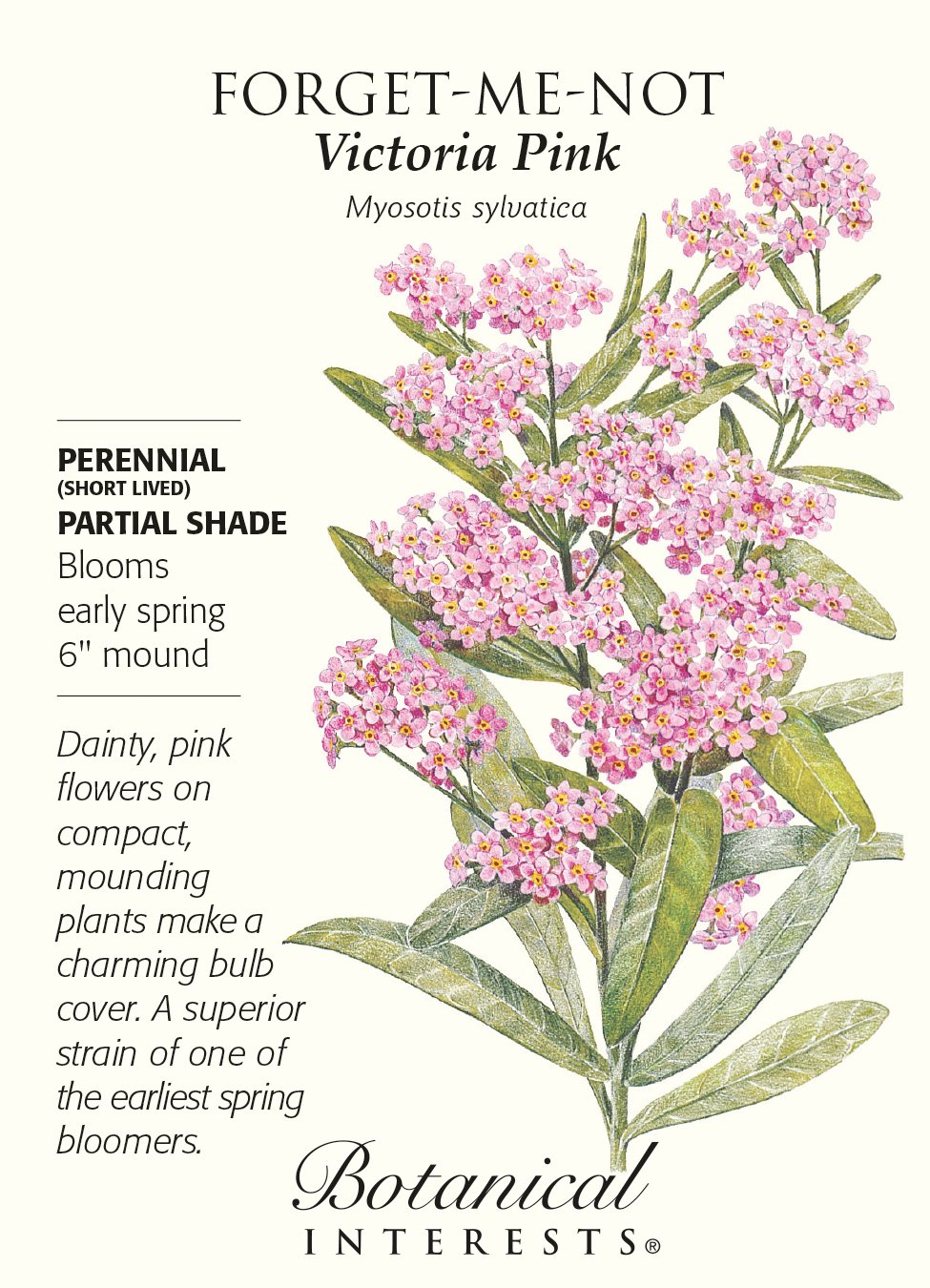 Amazon Victoria Pink Forget Me Not Seeds 25 Grams