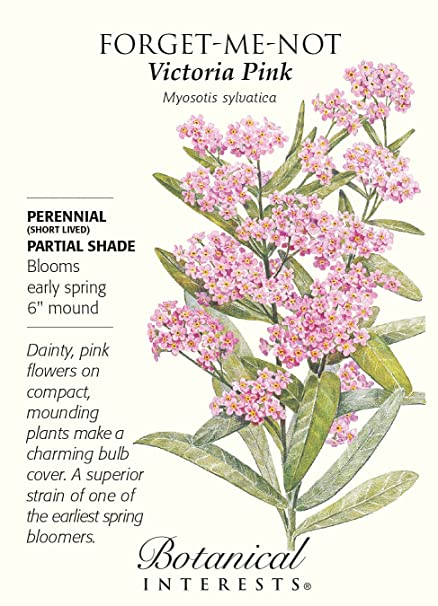 Amazon victoria pink forget me not seeds 25 grams victoria pink forget me not seeds 25 grams mightylinksfo