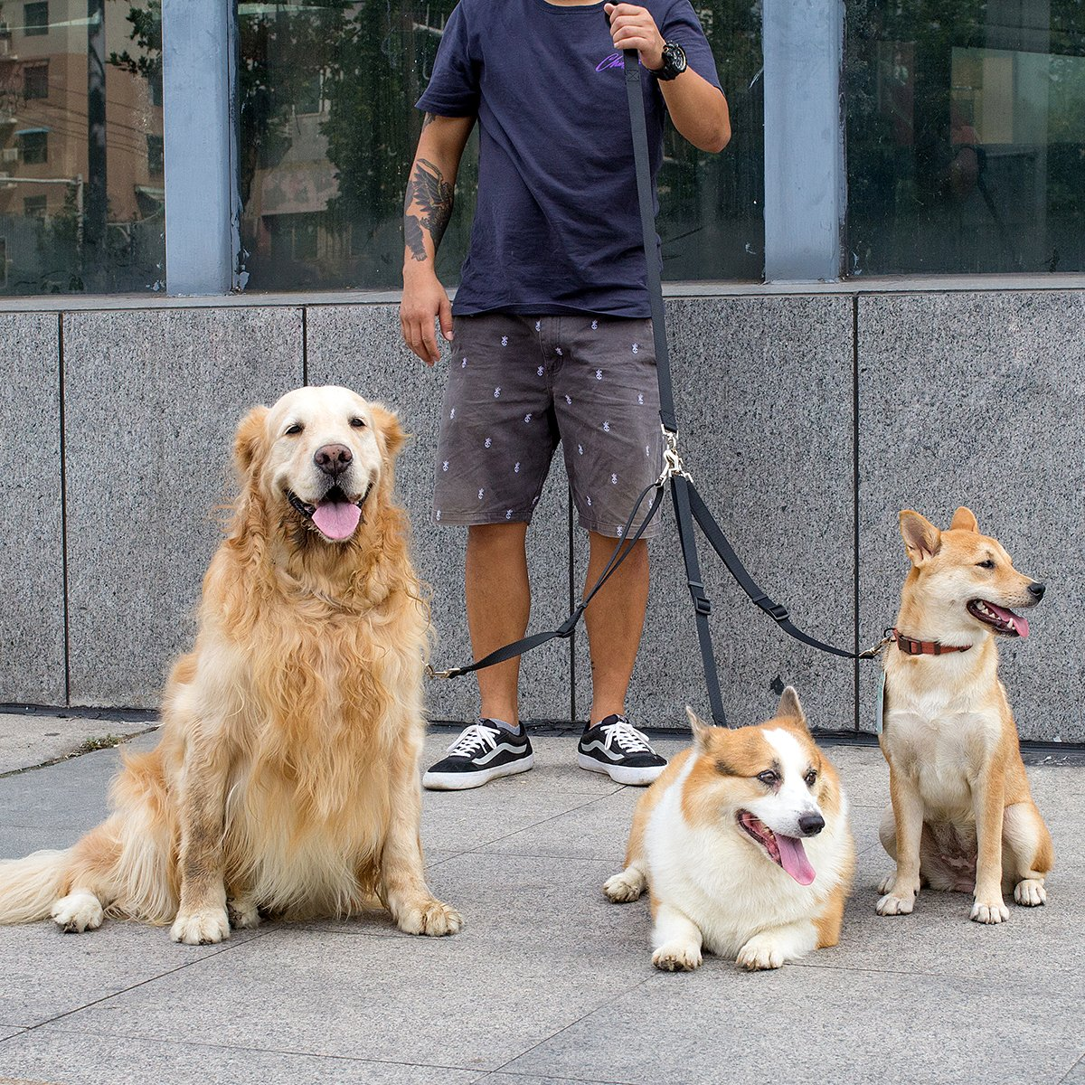 MEWTOGO Adjustable Pet Dog Leash Coupler-no Tangle Triple Nylon Puppy Leash for Walking and Training