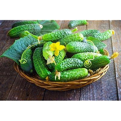Seeds Rare Cucumber Titus F1 Pickling Vegetable Organic Ukraine : Garden & Outdoor