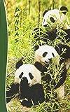 Pandas Notebook: Gifts / Presents ( Chinese Giant Panda Bears Ruled Notebook ) (Animal Series)