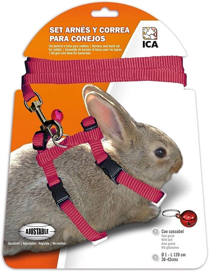 ICA DA1025 Set de Arnés y Correa para Conejos, Rojo: Amazon.es ...