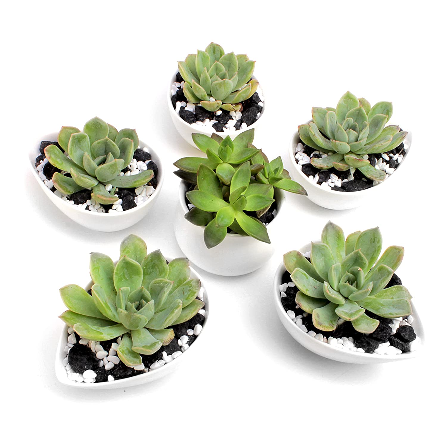 Succulent Planters   Set Of 6 Flower Shaped Combination Of 5pc Teardrop & 1pc Round Shaped, White, Mini, Ceramic Pots For Succulents, Mini Cactus & Other Small Plants. by Cozy Home Essentials