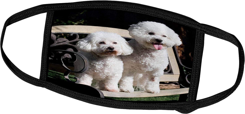3dRose Danita Delimont - Dogs - Two Bishon Frise Dog - US05 ZMU0060 - Zandria Muench Beraldo - Face Masks (fm_88774_1)