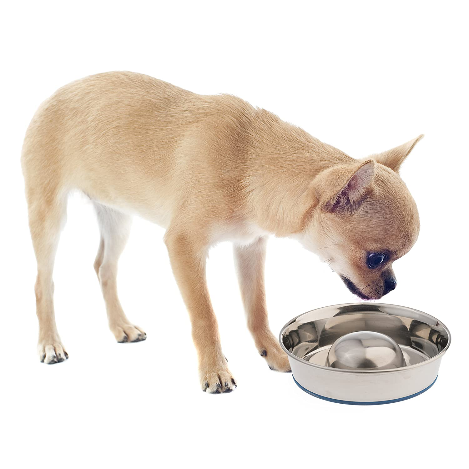 Pet Supplies : OurPets DuraPet Slow Feed Premium Stainless Steel Dog Bowl : Pet  Bowls : Amazon.com