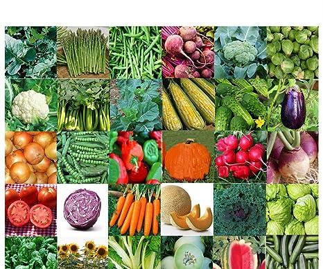 Amazon.com: EMERGENCY SURVIVAL VEGETABLE FRUIT GARDEN SEED HEIRLOOM ...
