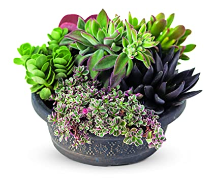 Charmant Savvy Succulent Dish Garden, 8u0026quot;