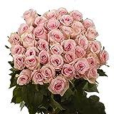 GlobalRose 50 Fresh Cut Pink Roses - Long Stem Flower - Perfect For Birthdays, Weddings or Anniversary.