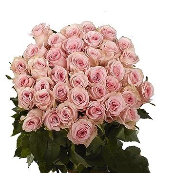 Amazoncom Globalrose 50 Pink Roses Beautiful Fresh Cut Flowers
