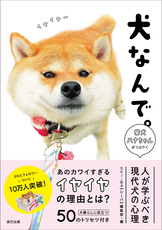 柴犬 ハナ ちゃん