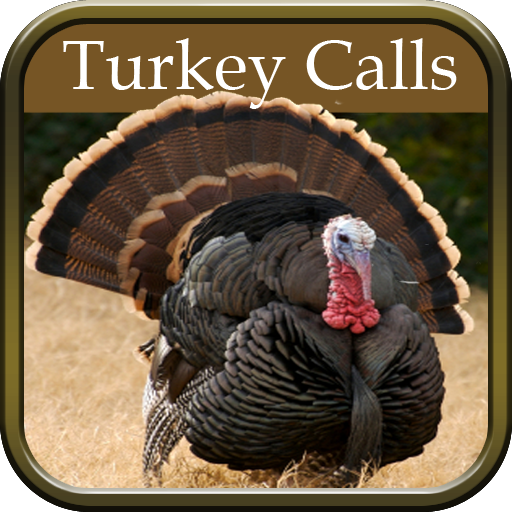 Turkey Hunting Calls for sale  Delivered anywhere in USA