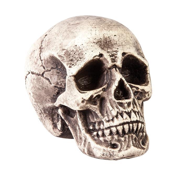 Amazon Morbid Enterprises Pale Skull Halloween Decor Multi One Size Home Kitchen
