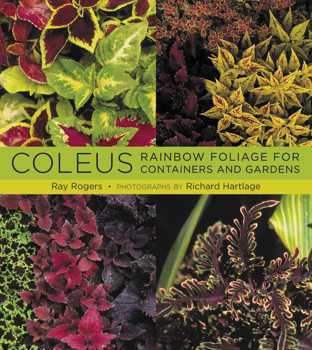 Coleus Rainbow Foliage For Containers And Gardens Ray Rogers