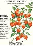 Chinese Lantern Heirloom Seeds - 150 mg - Physalis