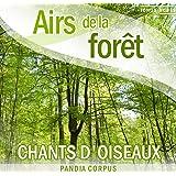 Sons des oiseaux dans la forêt (Sons de la nature)
