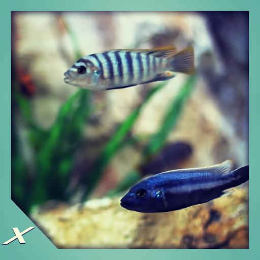Fish Tank HD - Fish Tank for Fire TV (Fish Farm)