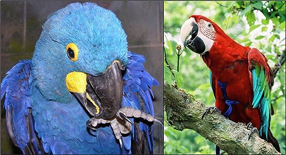 The AVIATOR El Arnés de Aves: Medio Azul: Amazon.es: Productos ...