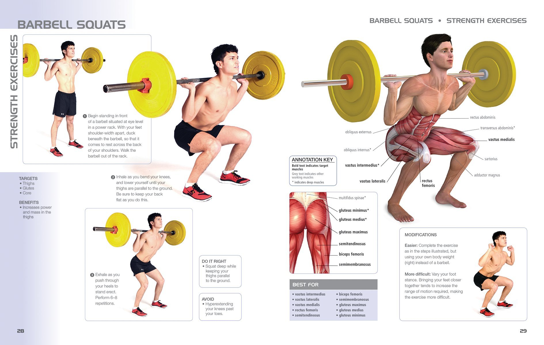 Anatomy of Strength and Conditioning: A Trainer\'s Guide to Building ...