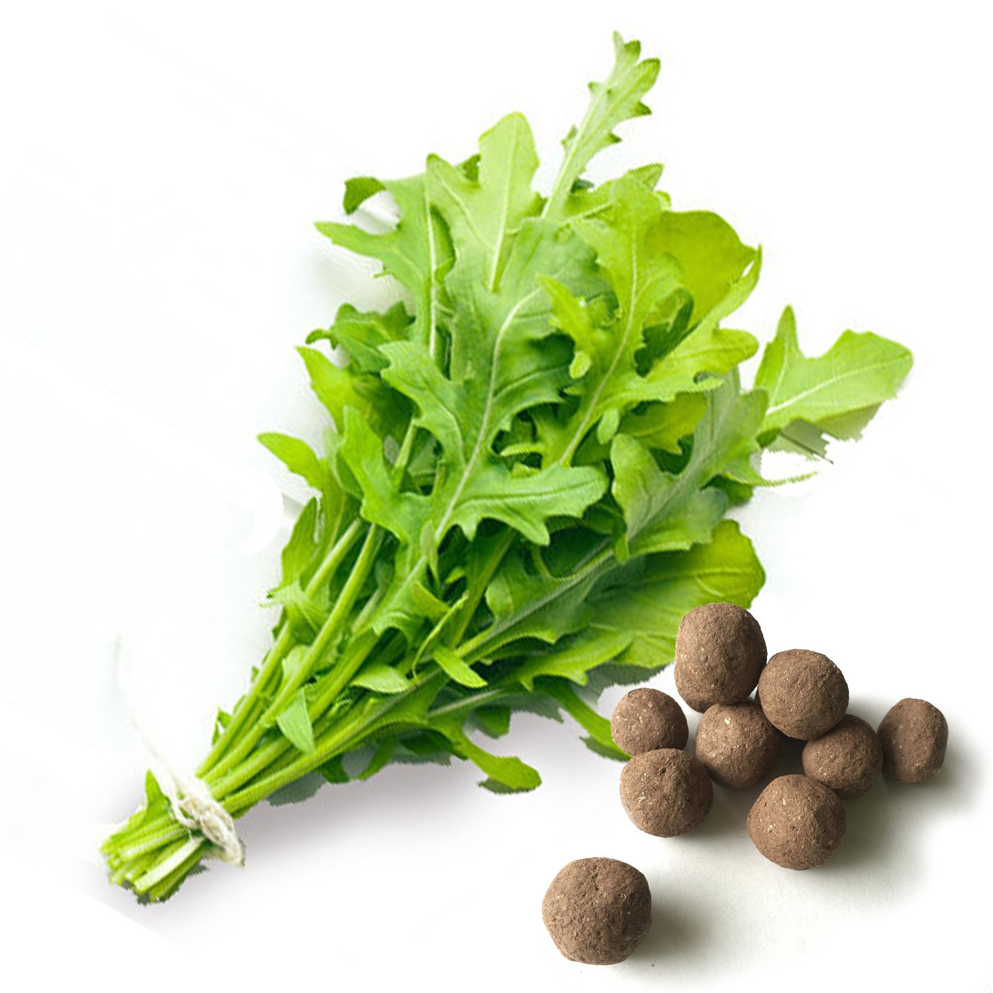 20 Arugula Seed Balls (Salas Rocket)- Herb & Vegetable Seed Bombs to Make Gardening Fun and Simple! by Seed-Balls.com