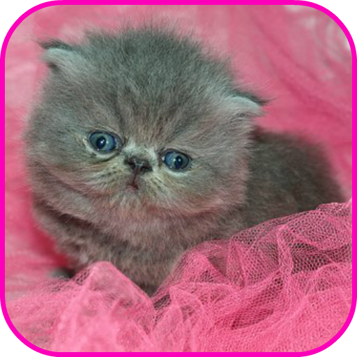 Amazon Com Cute Kittens Wallpaper Appstore For Android