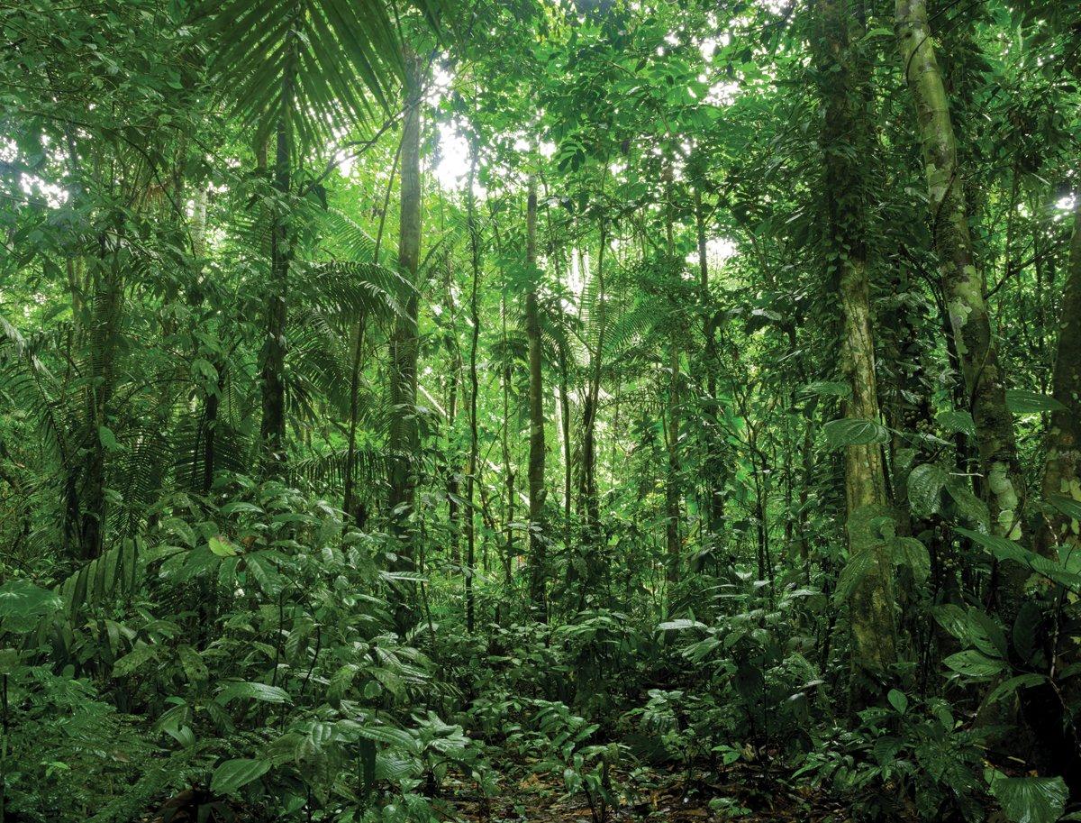 JP London PMUR2360 uStrip 剥がして貼れるはがせる壁デカールステッカー 壁画 森林森林の森 森の木 4 x 3フィート B00SV0D07G