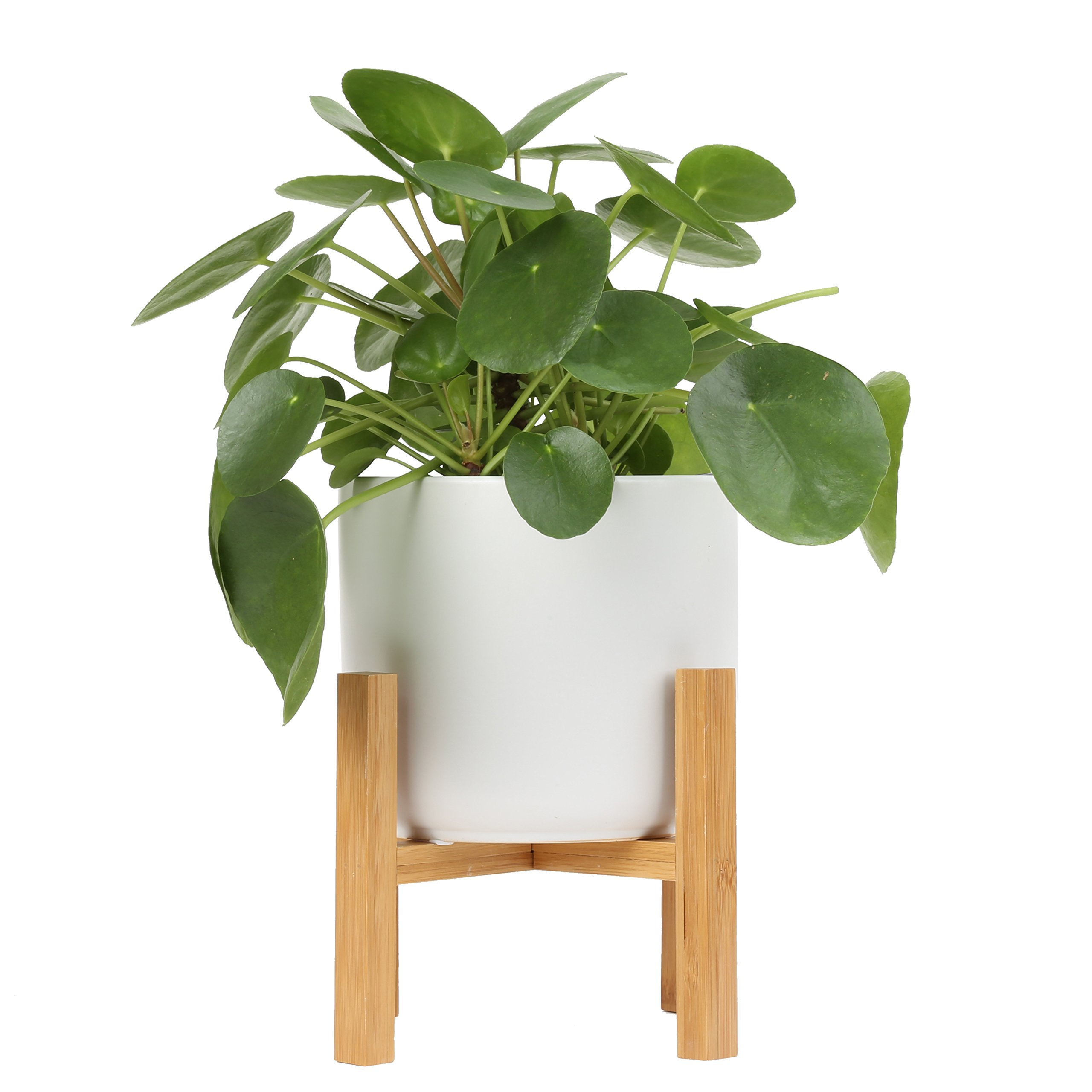 Costa Farms Pilea Sharing Indoor Tabletop Plant in 6-inch Mid-Century Modern Home Decor, White Ceramic Planter with Plant Stand, Direct from Farm