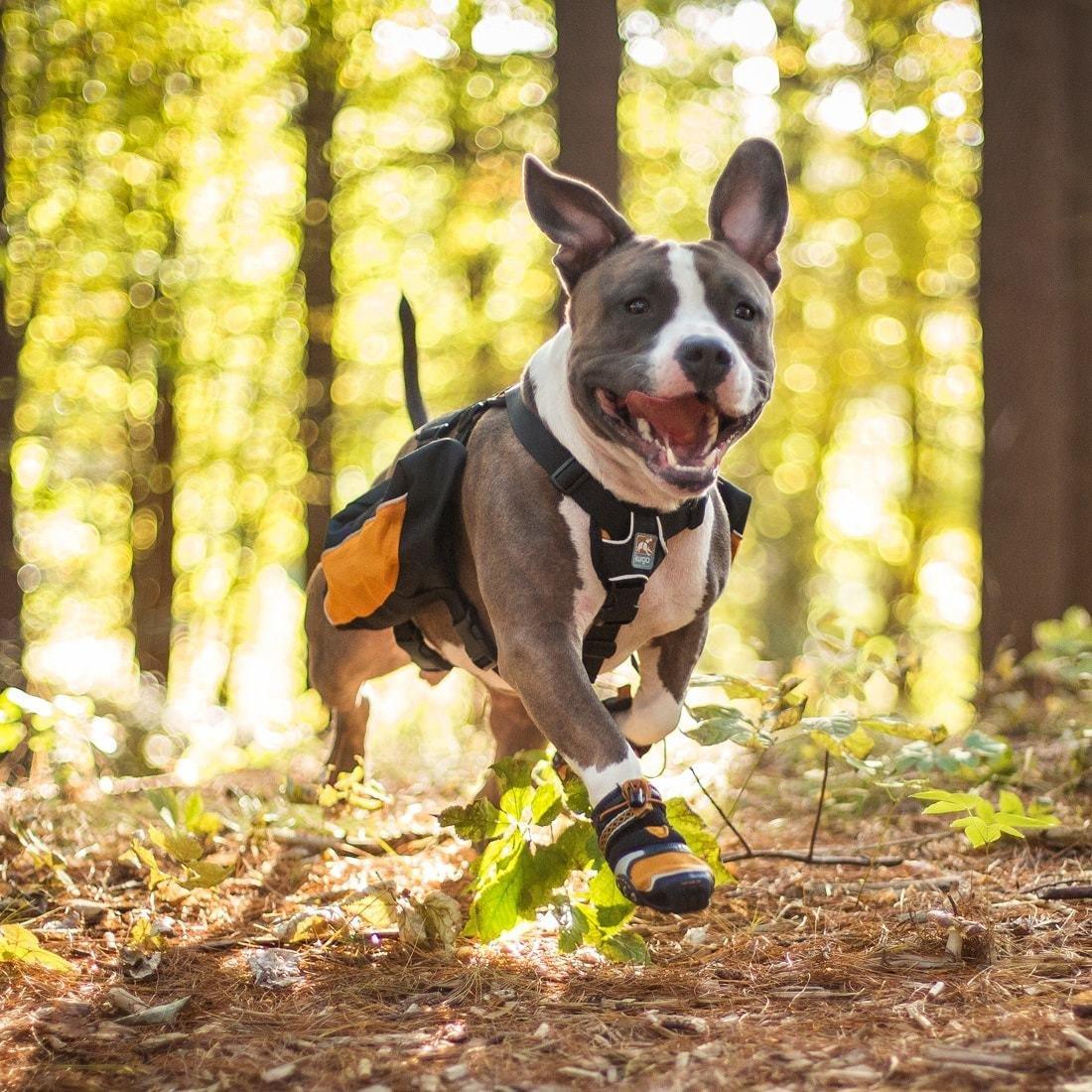 Kurgo dog camping hịking boots