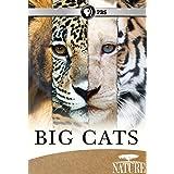 Nature: Big Cats Set