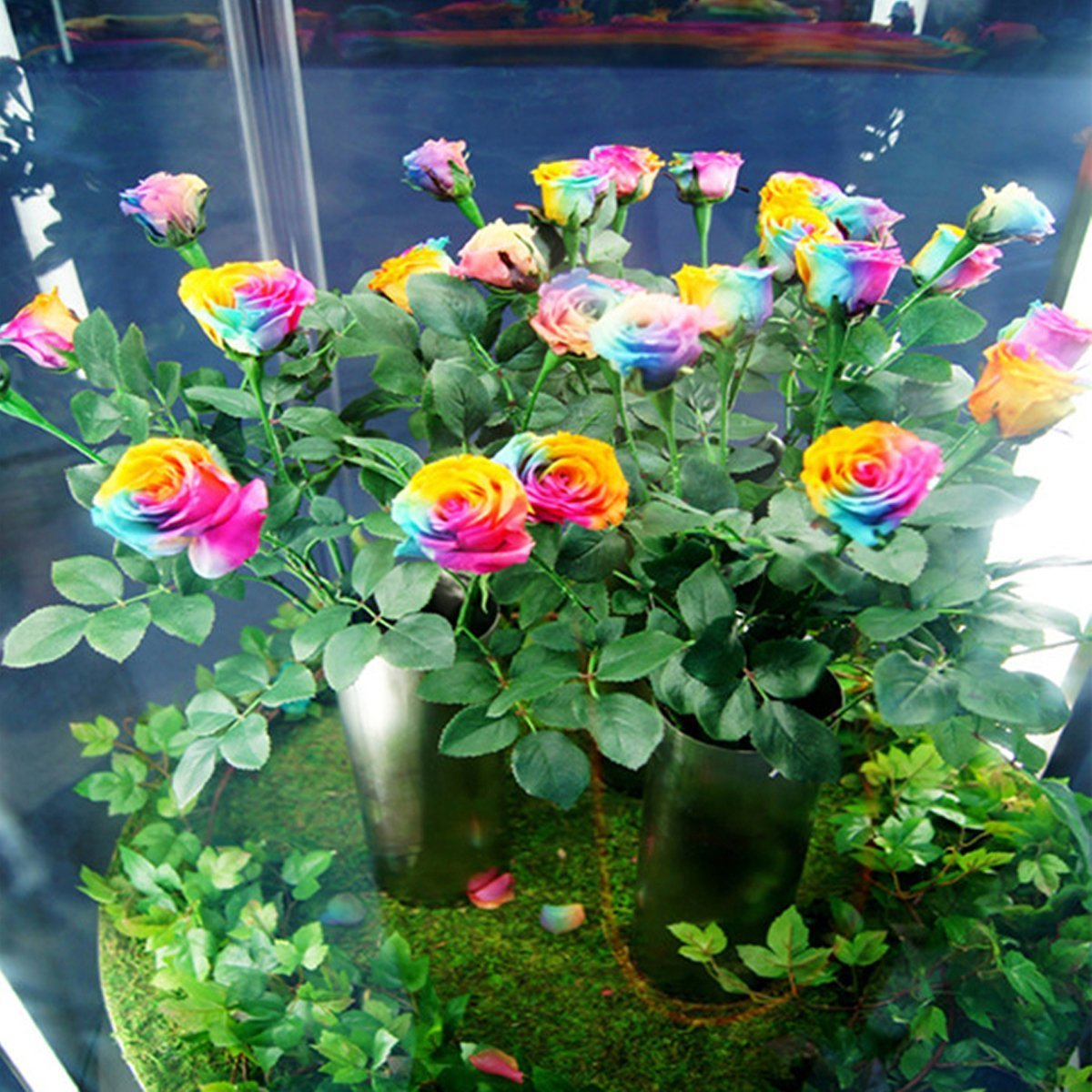 Amazon Dealglad 1000pcs Beautiful Rainbow Rose Seeds Multi