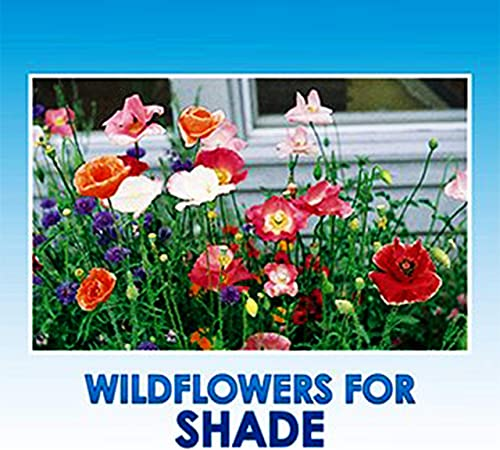 Amazon Com Partial Shade Wildflower Seeds Bulk 8 Bonus