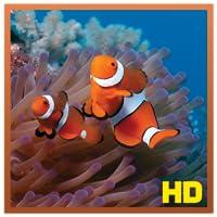 Coral Reef Aquarium HD