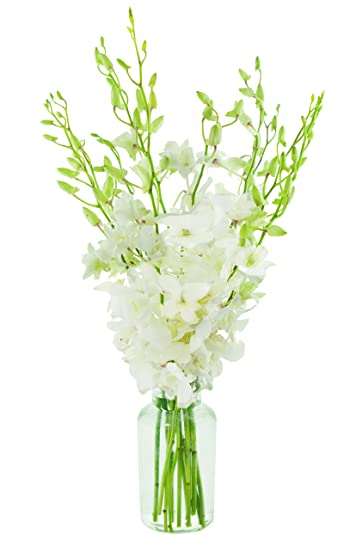 Amazon Kabloom Exotic Perla White Orchid Bouquet Of 10 Fresh
