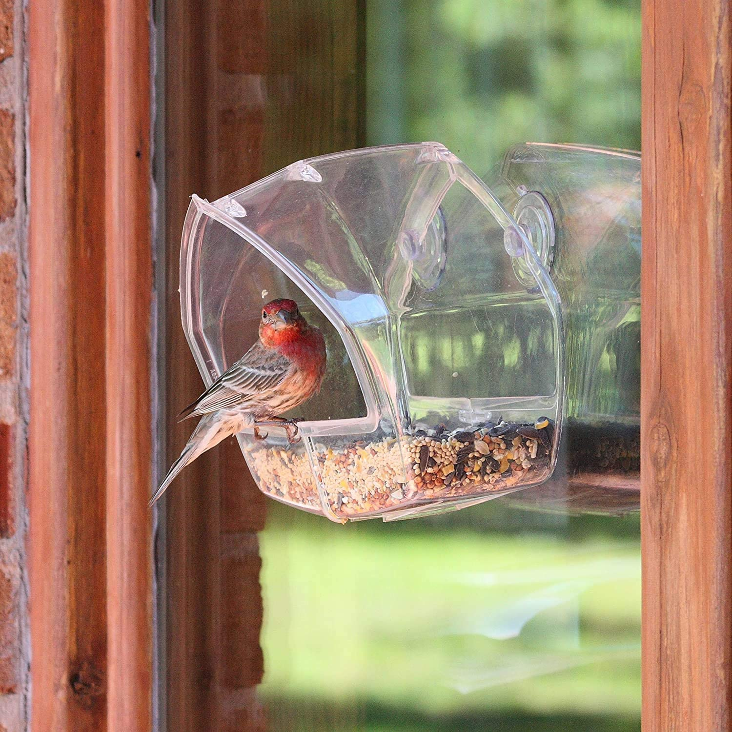 Birdscapes Clear Window Feeder 348-1 Pack