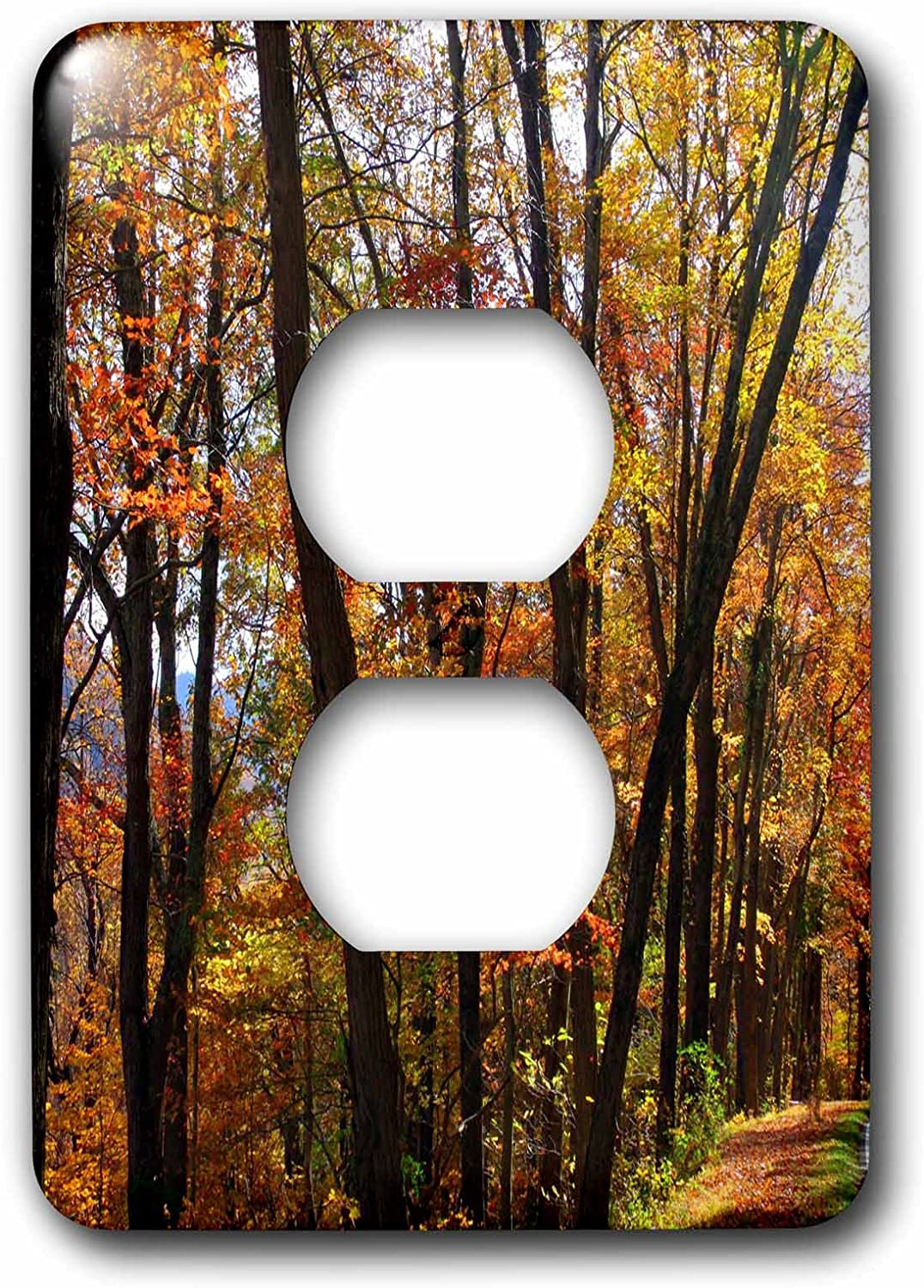 3drose Lsp 153675 6 Autumn Trees Dark Tree Trunks Highlighted By