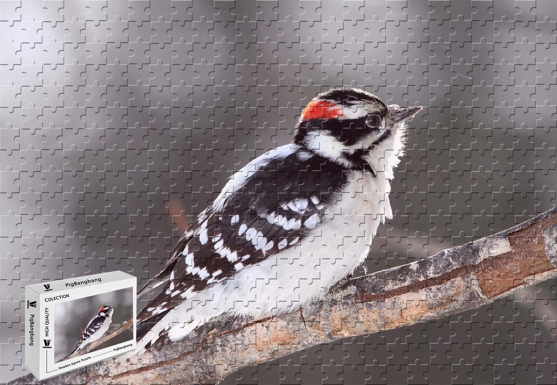 宅配 pigbangbang、20.6 X 15.1インチ、木製Largeサイズ – – A Woodpecker Woodpecker on B07FVH7LBY a tree branch – 500ピースジグソーパズル B07FVH7LBY, ロックファッションWAD-jellybeans:de0a7b15 --- 4x4.lt