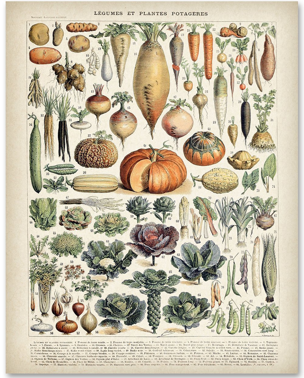 Antique Heirloom Vegetables - 11x14 Unframed Art Print - Great Gift for Kitchen Decor by Personalized Signs by Lone Star Art
