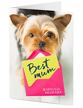 Best Mum Cute Yorkshire Terrier Puppy Dog With Special Delivery